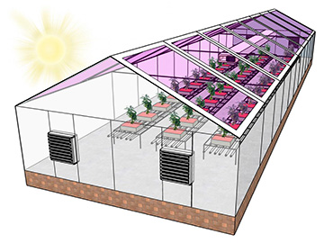Greenhouse drawing
