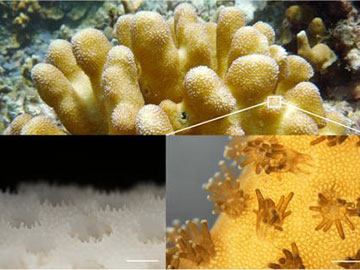 Bionic Corals Manage Light for Microalgae