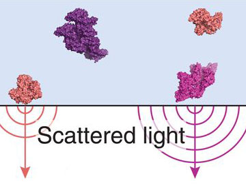 Weighing Biomolecules with Light
