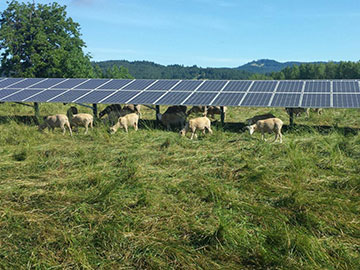 Could Solar Power Find a Home on the Farm?