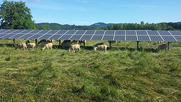Home Solar Tips - 2020